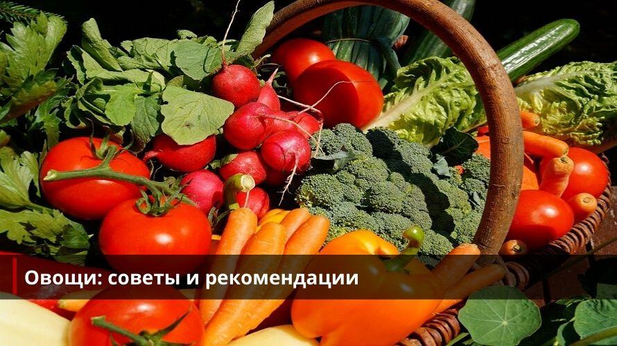 Овощи: советы и рекомендации